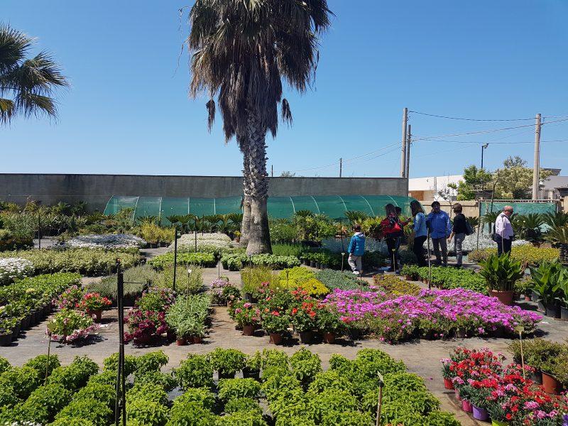 Vivaio Forestale Sicilia : Vivai piante forestali sicilia vivai a catania russo vivai
